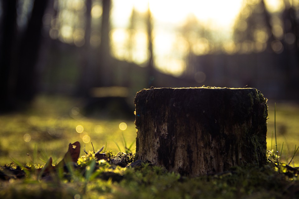 TREE STUMP HOMEPAGE