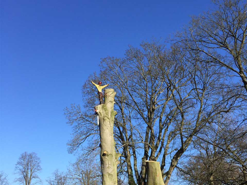 tree-surgery-homepage